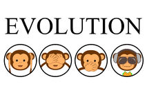 Τέσσερις πίθηκοι Στοκ Φωτογραφία