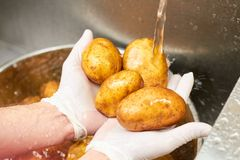 Τέσσερις πατάτες που πλένουν κάτω από το τρεχούμενο νερό Στοκ φωτογραφία με δικαίωμα ελεύθερης χρήσης