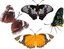 Τέσσερις πεταλούδες χρώματος που απομονώνονται στο λευκό Στοκ εικόνες με δικαίωμα ελεύθερης χρήσης