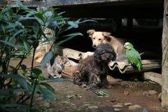 Τέσσερις φιλαράκοι ζουγκλών στοκ φωτογραφία
