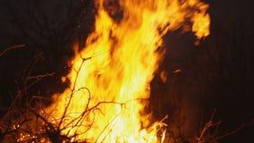 Καίγοντας πυρκαγιά σε ένα σκοτεινό υπόβαθρο απόθεμα βίντεο
