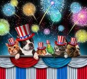 Τέταρτο Pet του εορτασμού Ιουλίου στοκ εικόνες