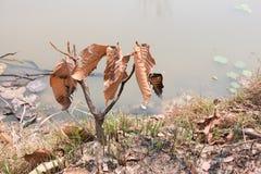 Τέφρα και μμένο δέντρο μετά από την πυρκαγιά Στοκ Εικόνα