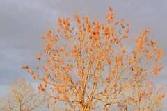 Τέφρα στα τέλη του φθινοπώρου στοκ εικόνες με δικαίωμα ελεύθερης χρήσης