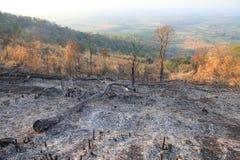 Τέφρες και πεσμένα δέντρα ως αποτέλεσμα της πυρκαγιάς και αποδάσωση για τη γεωργία στο τροπικό τροπικό δάσος της Ταϊλάνδης στοκ εικόνες