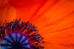 τέχνης ανασκόπησης συνόρων χαριτωμένη ταπετσαρία παπαρουνών προτύπων λουλουδιών σχεδίου θηλυκή filigree floral διανυσματική εκλεκ Στοκ Εικόνες