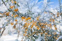 τέχνης ομορφιάς τέλειος χειμώνας makeup μόδας υψηλός βασικός Στοκ Φωτογραφίες