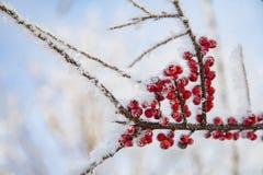 τέχνης ομορφιάς τέλειος χειμώνας makeup μόδας υψηλός βασικός Στοκ φωτογραφίες με δικαίωμα ελεύθερης χρήσης