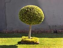 Τέχνη μορφής σφαιρών δέντρων Στοκ φωτογραφία με δικαίωμα ελεύθερης χρήσης