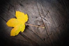 Τέχνη του δάσους Στοκ Φωτογραφία