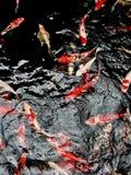 Τέχνη ψαριών της Ιαπωνίας Στοκ Φωτογραφία
