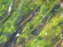 τέχνη όπως τη σύγχρονη φύση Στοκ Εικόνες