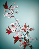 τέχνη floral Στοκ Φωτογραφίες