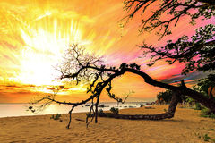 Τέχνη Masoala ηλιοβασιλέματος Στοκ φωτογραφία με δικαίωμα ελεύθερης χρήσης