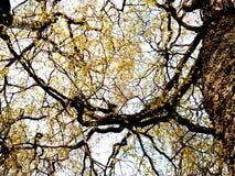 Τέχνη natur στοκ φωτογραφία με δικαίωμα ελεύθερης χρήσης