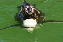 τέχνη penguin Στοκ εικόνες με δικαίωμα ελεύθερης χρήσης