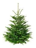 Τέλειο δέντρο έλατου στο καθαρό λευκό στοκ φωτογραφίες