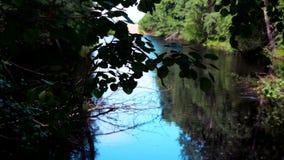 Τέλμα, μια μικρή λίμνη με μια άγρια, πυκνή βλάστηση γύρω φιλμ μικρού μήκους
