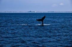 Τέλος ουρών φαλαινών Humpback της κατάδυσης Στοκ φωτογραφία με δικαίωμα ελεύθερης χρήσης