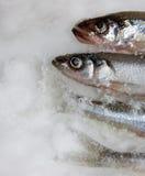 τήξη ψαριών Στοκ φωτογραφία με δικαίωμα ελεύθερης χρήσης