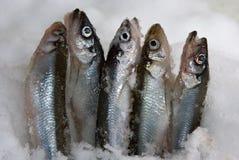 τήξη ψαριών Στοκ Φωτογραφίες