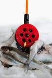 τήξη ψαριών Στοκ Εικόνες