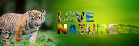 Τίγρης με τη φύση αγάπης κειμένων Στοκ Εικόνες
