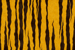 τίγρη ανασκόπησης Στοκ Εικόνες