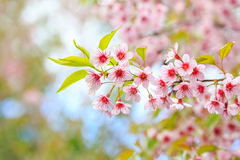Τίγρη βασίλισσας λουλουδιών Στοκ φωτογραφίες με δικαίωμα ελεύθερης χρήσης