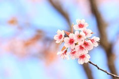 Τίγρη βασίλισσας λουλουδιών Στοκ Φωτογραφίες