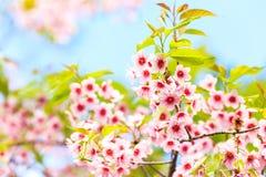Τίγρη βασίλισσας λουλουδιών Στοκ Εικόνα