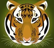 Τίγρη Ζωική Αφρική Στοκ Φωτογραφία