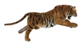 Τίγρη κυνηγιού Στοκ Εικόνα