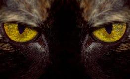 τίγρη ματιών Στοκ εικόνα με δικαίωμα ελεύθερης χρήσης