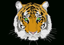 Τίγρη με τα πράσινα μάτια Στοκ Εικόνες