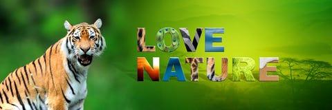 Τίγρη με τη φύση αγάπης κειμένων Στοκ εικόνες με δικαίωμα ελεύθερης χρήσης