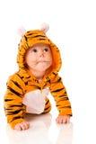 τίγρη μωρών στοκ φωτογραφία