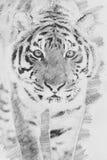 Τίγρη Σκίτσο με το μολύβι Στοκ Φωτογραφίες