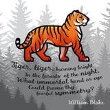 Τίγρη της Βεγγάλης στο δασικό σχέδιο αφισών Διπλό διανυσματικό πρότυπο έκθεσης Παλαιά απεικόνιση ποιήματος στο ομιχλώδες υπόβαθρο Στοκ Εικόνα