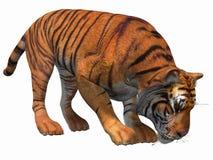 τίγρη διανυσματική απεικόνιση