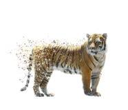 Τίγρη Watercolor Στοκ Εικόνες
