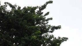 Τίναγμα δέντρων στη βροχή απόθεμα βίντεο