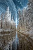 Τίτλος μεταξύ των δέντρων Στοκ φωτογραφίες με δικαίωμα ελεύθερης χρήσης