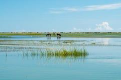 ταΐζοντας άγρια περιοχές &a Στοκ φωτογραφίες με δικαίωμα ελεύθερης χρήσης