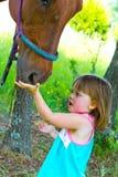 Ταΐζοντας άλογο Στοκ Εικόνες