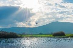 Ταΐζοντας λίμνη Στοκ φωτογραφία με δικαίωμα ελεύθερης χρήσης