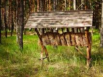 Ταΐζοντας γούρνα Στοκ εικόνες με δικαίωμα ελεύθερης χρήσης