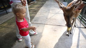 Ταΐζοντας ελάφια μικρών κοριτσιών στο πάρκο απόθεμα βίντεο
