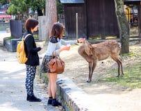 Ταΐζοντας ελάφια στο Νάρα, Ιαπωνία 2 Στοκ Εικόνες