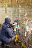 Ταΐζοντας ελάφια Στοκ φωτογραφία με δικαίωμα ελεύθερης χρήσης